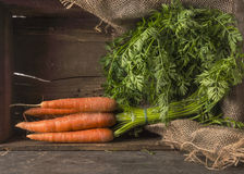 Carrots bunch with leaves Stock Photography