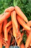 Carrots 1 Royalty Free Stock Photos