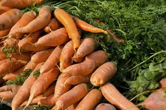 Carrots. Bunches of fresh carrots for sale in the outdoor farm market Royalty Free Stock Photos