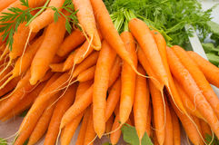Carrots. Bunches of carrots on sale on a street market Royalty Free Stock Images