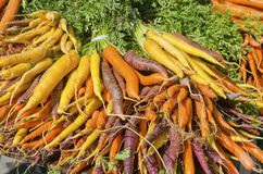 Carrots. Carrot bunches in purple, orange, and yellow for sale at the outdoor farm market Stock Photo