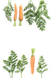 Carrots and carrot tops Royalty Free Stock Photos