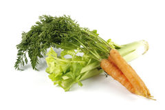 Carrots and Celery. Fresh bunch of orange carrots with green leafs and celery on a reflective white background Royalty Free Stock Image