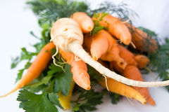 Carrots and celery stock images