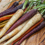 Carrots. Colorful carrot medley fresh from the garden Stock Image