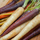 Carrots. Colorful carrot medley fresh from the garden Royalty Free Stock Photos