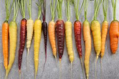 Carrots. Colorful carrots on a gray ceramic background Royalty Free Stock Images