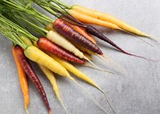 Carrots. Colorful carrots on a gray ceramic background Royalty Free Stock Photo