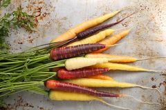 Carrots. Colorful carrots on a gray metal background Stock Image