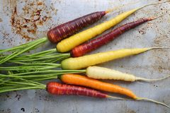 Carrots. Colorful carrots on a gray metal background Royalty Free Stock Images