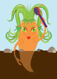 Carrots comb hair. Stock Image