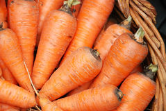 Carrots crop in a basket Stock Photos