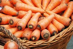 Carrots crop in a basket Stock Image