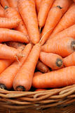 Carrots crop in a basket Stock Photography