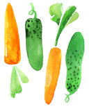 Carrots and cucumber Stock Images
