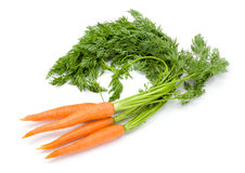 Carrots (Daucus carota ssp. sativus) Royalty Free Stock Photography
