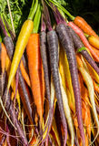 Carrots in different colors Royalty Free Stock Photography