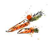 Carrots, drawing by watercolor and ink with paint splashes on white background. Royalty Free Stock Photo