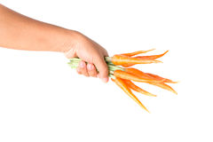 Carrots in farmer hand with white background. Baby carrots in farmer hand stock photos