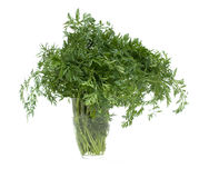 Carrots' foliage Stock Photos