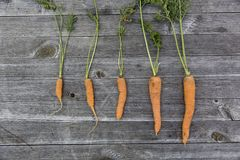 Carrots, Food, Photography Royalty Free Stock Photo