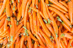 Carrots. Fresh carrots all piled on top of each other Royalty Free Stock Photos