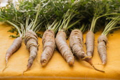 Carrots fresh from the earth-lined up with greens attached royalty free stock photo