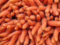 Carrots fresh from the farm as they can be found stock image