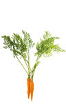 carrots with fresh green leaves Royalty Free Stock Photo