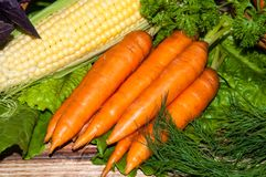Carrots and fresh greenery Royalty Free Stock Images