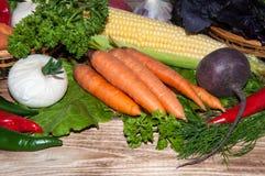 Carrots and fresh greenery Stock Photos