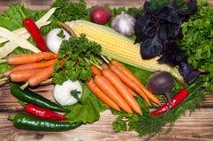 Carrots and fresh greenery Royalty Free Stock Photo
