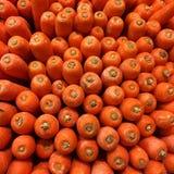 Carrots. Fresh carrots lineups stock photos