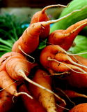 Carrots. Freshly-picked carrots are a crunchy and colorful root vegetable Royalty Free Stock Photos