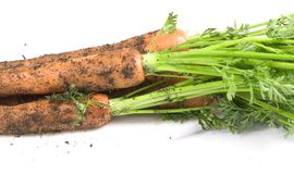 Carrots from garden Royalty Free Stock Images