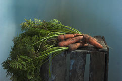 Carrots from a garden bed Royalty Free Stock Photos