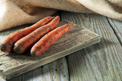 Carrots from the garden Royalty Free Stock Photography