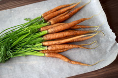 Carrots from the garden on white paper. Fresh carrots from the garden brought by Stock Photo