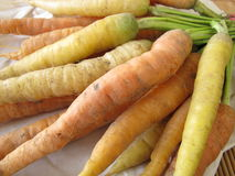 Carrots from the garden Royalty Free Stock Photos