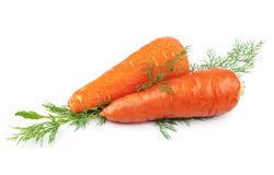 Carrots with green dill Stock Image