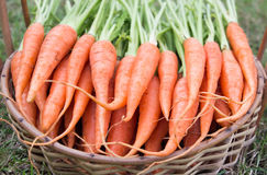 Carrots with green leaf Stock Photos