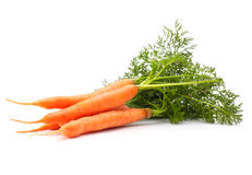 Carrots with green leaves Stock Photography
