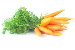 Carrots with green leaves isolated on white Stock Photos