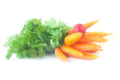 Carrots with green leaves and radish isolated on white Stock Photography