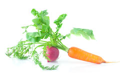 Carrots with green leaves and radish isolated on white Stock Image