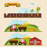 Carrots, the growth cycle of plants. Collection and delivery of. Beet, the growth cycle of plants. Collection and delivery of the crop. Vector illustration Stock Images