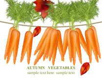 Carrots hanging Vector detailed realistic illustration Royalty Free Stock Image