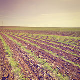 Carrots in Israel Royalty Free Stock Photo
