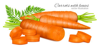 Carrots with leaves Stock Images