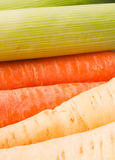 Carrots, leeks and parsnips Royalty Free Stock Photography